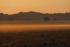 sunrise planken wambuis#03