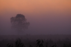 sunrise ginkelse hei#03