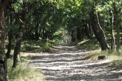 rooseboomswegje, roekelse bos
