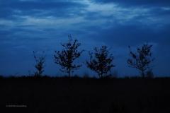 sunset ginkelse hei#09