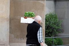 oude man + kruiden