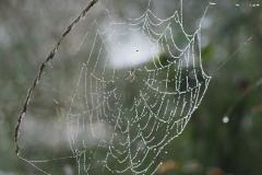 spinnenweb#01