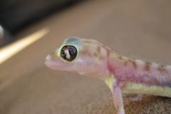 gecko#01