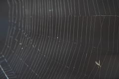 spinnenweb#03