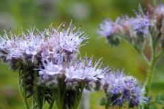 bloem#1603