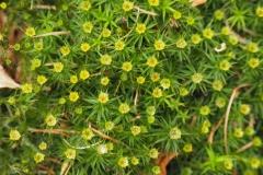 bloem geel#17
