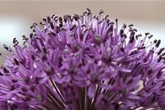 bloem#1612