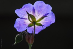 bloem#21
