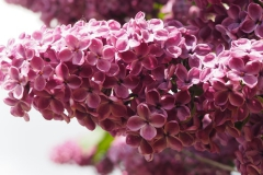 bloem#1610