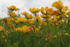 bloem geel#06