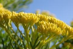 bloem geel#05