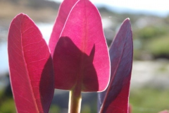 bloem#1602