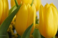 bloem geel#12