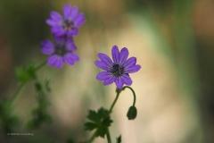 bloem#1627 (20200424)
