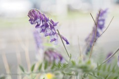 bloem#1631