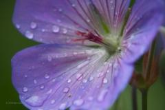 bloem#1608