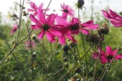 bloem#1605