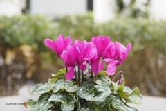 bloem#1817