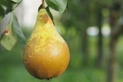 vrucht#03