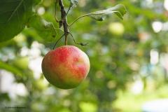 vrucht#17