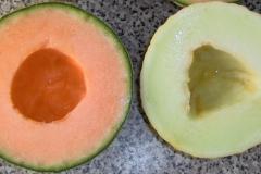 vrucht#16