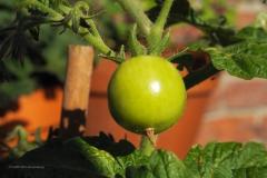 groente#09 (20200626)