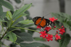 vlinder#16
