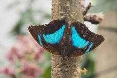 vlinder#15 (20170524)  insecten