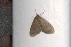 nachtvlinder#07 (20191204) insecten