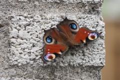 vlinder#05