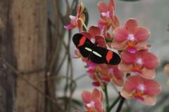 vlinder#11