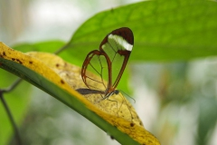 vlinder#10 (20170524)  insecten