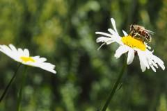 bij#01 (20200601) insecten