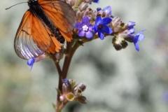 vlinder#15
