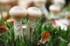 paddenstoel#08