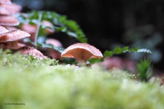 paddenstoel#09