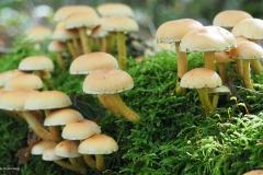paddenstoel#12