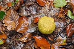 paddenstoel#18