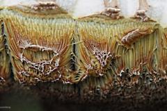 paddenstoel#25d (20190828)