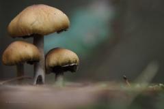 paddenstoel#22