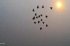 duif#02