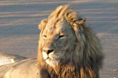 leeuw#01