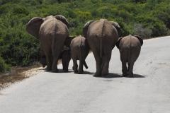 olifant#10