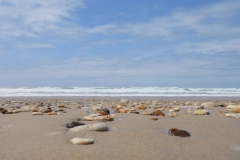 zand#(20140705) landschappen