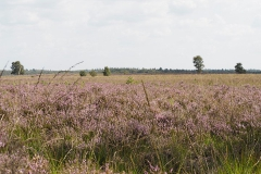 ginkelse heide#(20190821) landschappen
