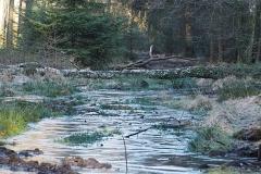 planken wambuis#(20180107) landschappen