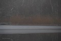 kreelse plas#(20210117) landschappen