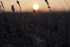 sunrise ginkelse heide#(20210131)b landschappen