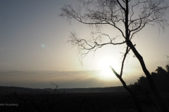 sunrise planken wambuis#02
