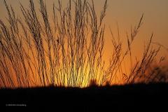 sunset ginkelse hei#(20200421) landschappen